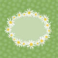 Camomille flowers greeting card Stock Image