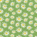 Camomille flowers seamless pattern Royalty Free Stock Photos