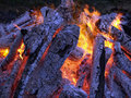 Camp-fire Stock Image