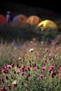 Camp in wild flowers Royalty Free Stock Photo