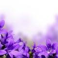 Jar kvety hranice