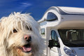 Camper and dog Royalty Free Stock Photos