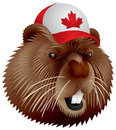 Canadian beaver Stock Photo