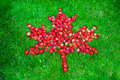 Canadian flag with maple leaf made of strawberries on a green lawn to celebrate Canada Day Royalty Free Stock Photo