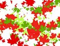 Canadian Maple Leaf Christmas Background Stock Image