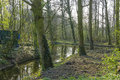 Canal meandering through spring forest the Stock Photography