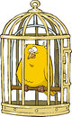 Canary in a bird cage Royalty Free Stock Photography
