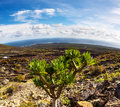 Canary lanscape with cactus lanzarote landscape mountains and ocean in islands Stock Images