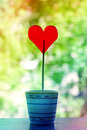 Candy heart in a pot growing love Royalty Free Stock Photos