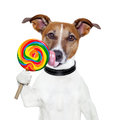 Candy lollypop  licking  dog Royalty Free Stock Photos