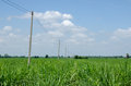 Cane farm mini electricity post in Stock Photos
