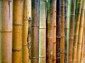 Cane row upon row of bamboo background Stock Images