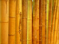 Cane row upon row of bamboo background Royalty Free Stock Photography