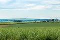 Cane sugar field, Pradopolis. Royalty Free Stock Photo