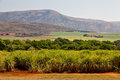 Cane sugar field in a valley Royalty Free Stock Image