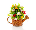 Cane watering can with plastic Dutch tulips Stock Photos
