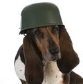 Canine soldier Royalty Free Stock Photo