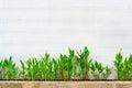 Canna Lily plants near wall Royalty Free Stock Photo