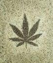 Cannabis Hemp Seeds Leaf Close...