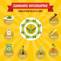 Cannabis infographic concept, flat style