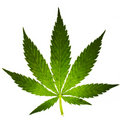Cannabis leaf Royalty Free Stock Images