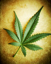 Cannabis leaf on grunge background. Royalty Free Stock Photo