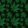 Cannabis leafs seamless pattern