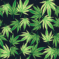 Cannabis marijuana leafs. Seamless pattern. Vector plant background.