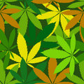 Cannabis seamless pattern Royalty Free Stock Photos
