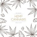 Cannabis sketch background. Medical marijuana leaves and seeds concept for cbd oil banner. Hand drawn ganja vector