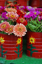 Canned Zinnias Stock Photography