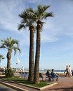 Cannes france july palm trees on the croisette in c city located french riviera city is famous for its film Royalty Free Stock Images
