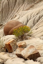 Cannonball Concretions Theodore Roosevelt N P Stock Photography