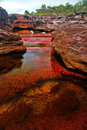 Cano Cristales, The Seven Colored River Stock Image