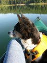 Canoeing with Dog Royalty Free Stock Photos