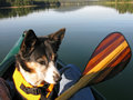 Canoeing with Dog Stock Photo