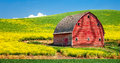 Canola and barn an old red in a blooming field of yellow Stock Photo