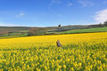 Canola Crop Magic Royalty Free Stock Photos