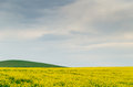 Canola field near Ballarat Royalty Free Stock Photo