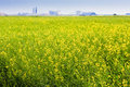 Canola Field on the Prairies Royalty Free Stock Photo