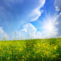 Canola field under clouds and sun Stock Photos