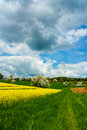 Canola field vibrant rape with road in colorful landscape Stock Photo