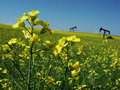 Canola and Oil Pumps Royalty Free Stock Photo