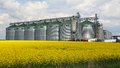 Canola oil silo rapeseed field and at farm Stock Image