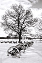 Canon and Old Tree at Valley Forge National Park Stock Images