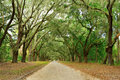 Canopy of oak trees covered in moss forsyth park and path wormsloe historic site a breathtaking live avenue one mile long isle Stock Photography