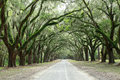Canopy of oak trees covered in moss forsyth park savannah geo and path georgia Royalty Free Stock Photo