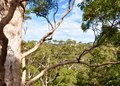 Canopy of tingle trees western australia elevated view the forest from the tree top walk in denmark valley the giants Stock Images