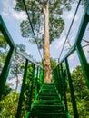Canopy Trail in Bukit Lawang Orangutan Viewing Centre Royalty Free Stock Photo