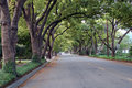 Canopy of Trees lining the road Royalty Free Stock Photography